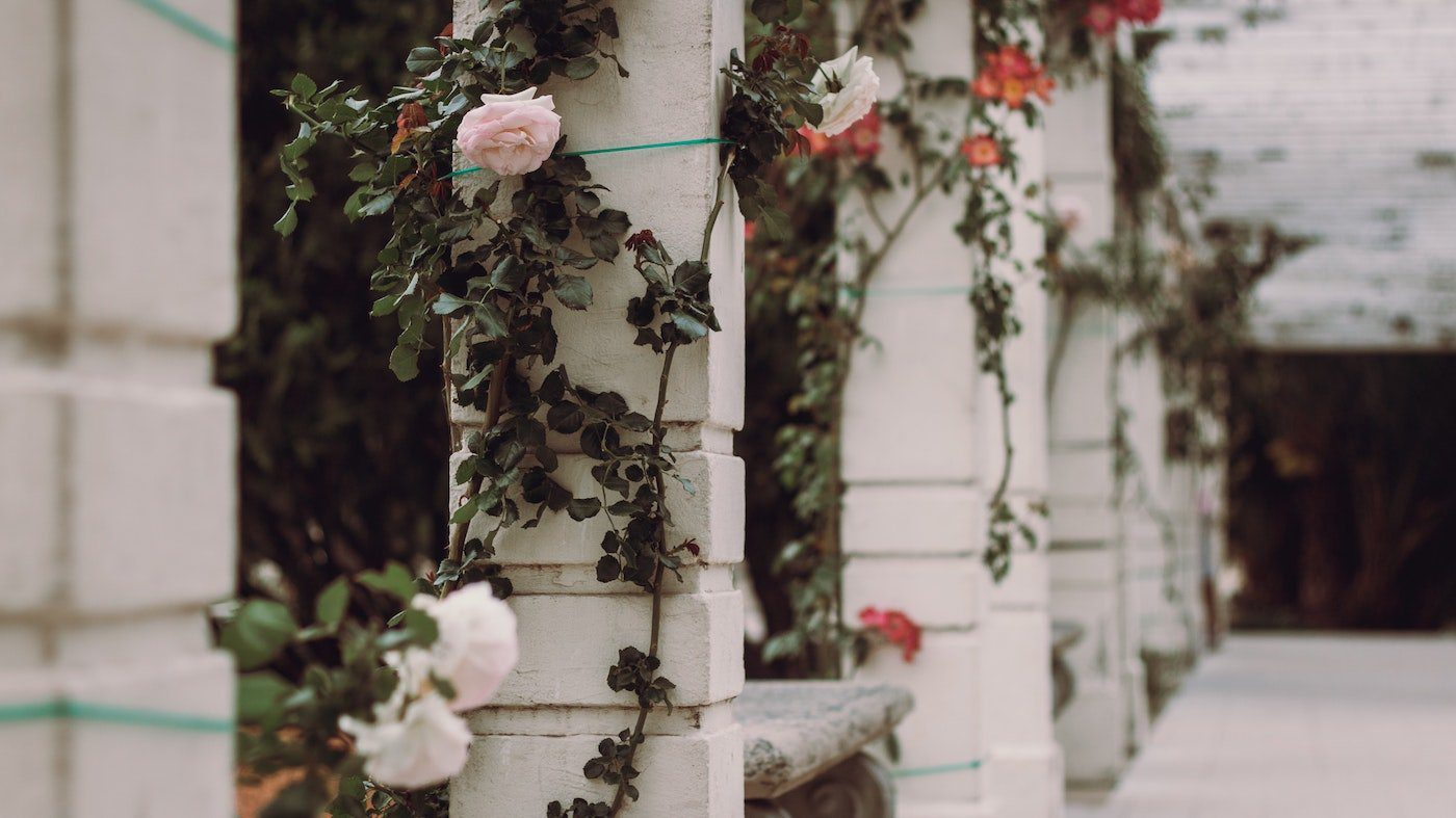 professor green thumb illustrates best flowering vines for commercial and public spaces